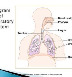 diagram of respiratory system [ 1024 x 768 Pixel ]