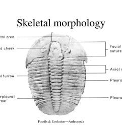 fossils evolution arthropoda [ 1024 x 768 Pixel ]
