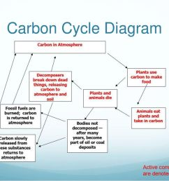 8 carbon cycle diagram [ 1024 x 768 Pixel ]