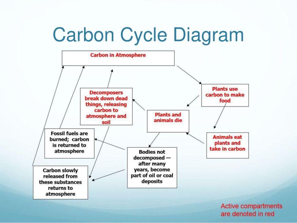 medium resolution of 8 carbon cycle diagram