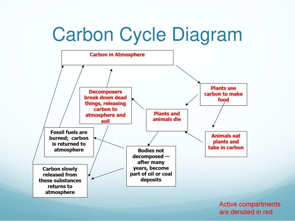 hight resolution of 8 carbon cycle diagram