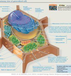 reece j b campbell n a 2011 campbell biology [ 1024 x 768 Pixel ]