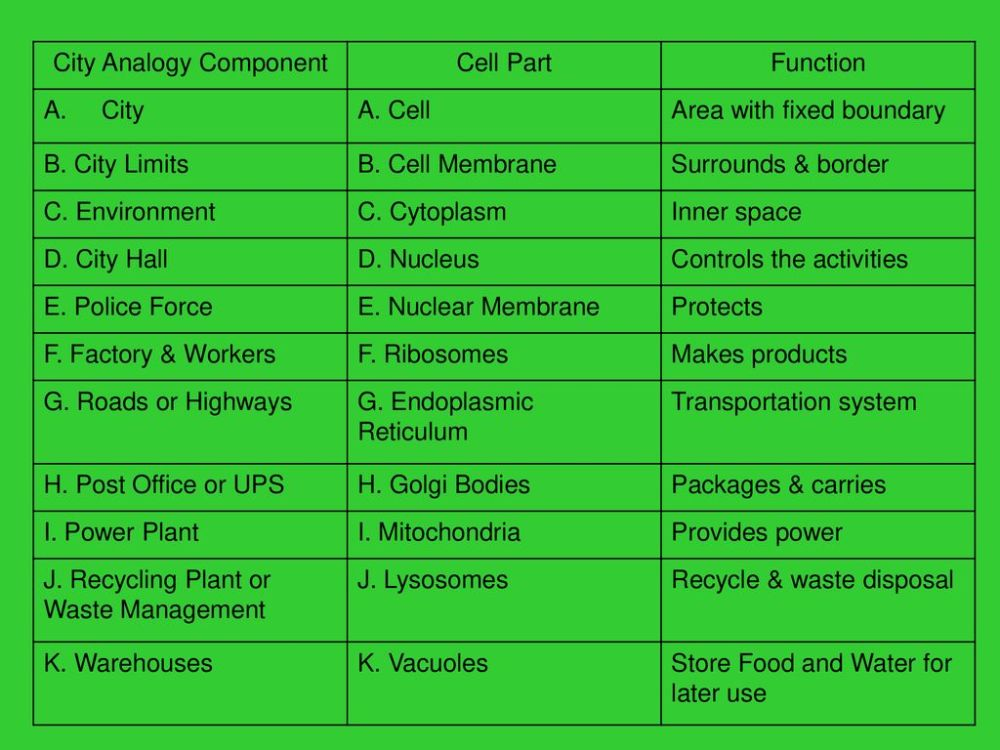medium resolution of Cell City Project. - ppt download