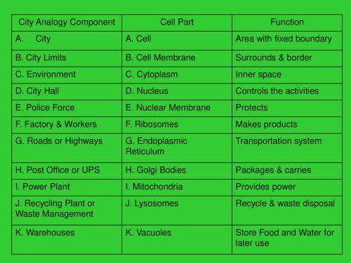 small resolution of Cell City Project. - ppt download