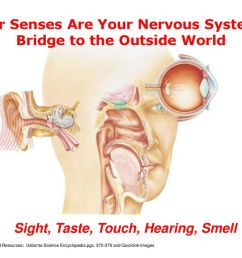 your senses are your nervous system s bridge to the outside world [ 1024 x 768 Pixel ]
