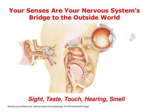small resolution of your senses are your nervous system s bridge to the outside world