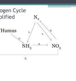 nitrogen cycle simplified [ 1024 x 768 Pixel ]