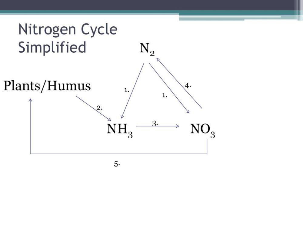 medium resolution of nitrogen cycle simplified