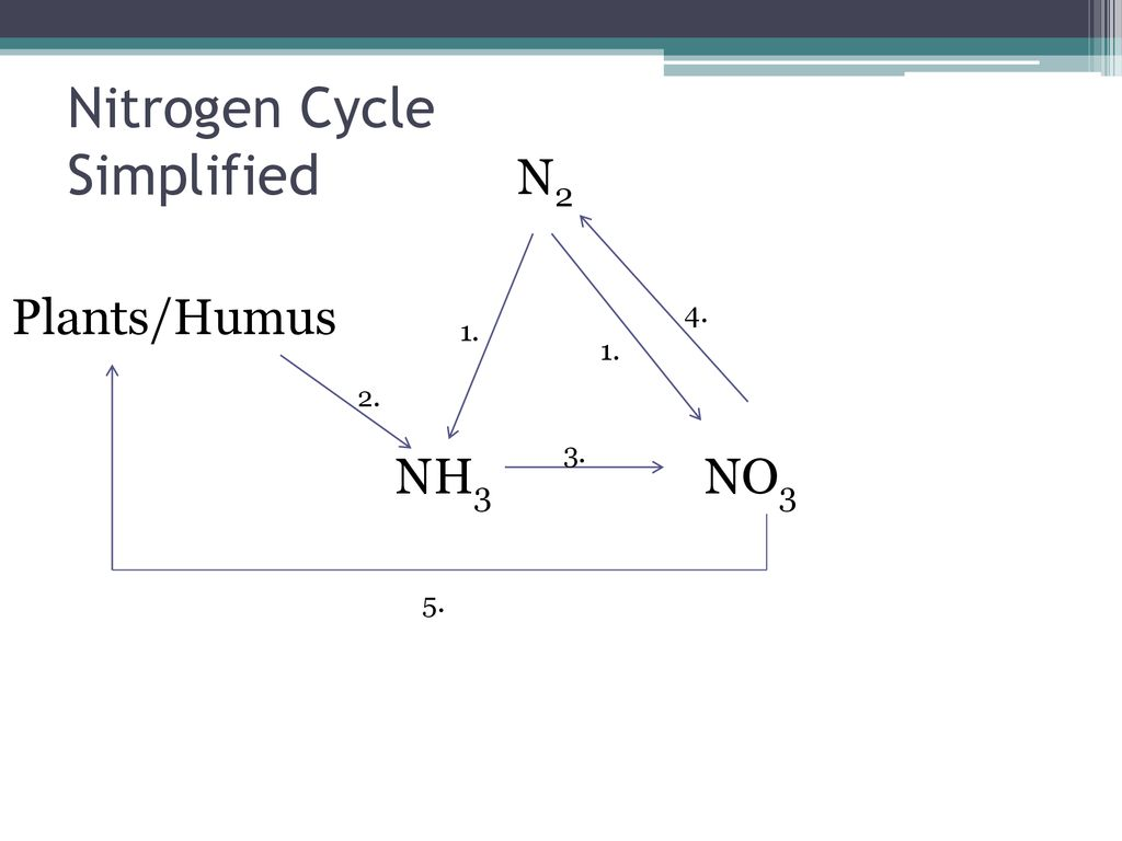 hight resolution of nitrogen cycle simplified