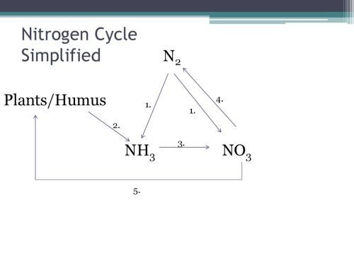 small resolution of nitrogen cycle simplified