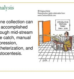 5 urinalysis urine collection can be accomplished through mid stream free catch manual expression catheterization and cystocentesis  [ 1024 x 768 Pixel ]