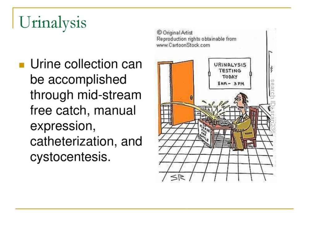 medium resolution of 5 urinalysis urine collection can be accomplished through mid stream free catch manual expression catheterization and cystocentesis