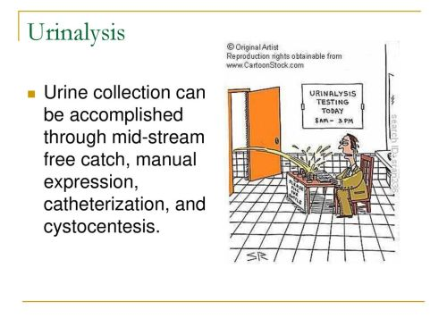 small resolution of 5 urinalysis urine collection can be accomplished through mid stream free catch manual expression catheterization and cystocentesis