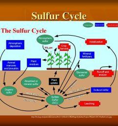 14 sulfur cycle [ 1024 x 768 Pixel ]
