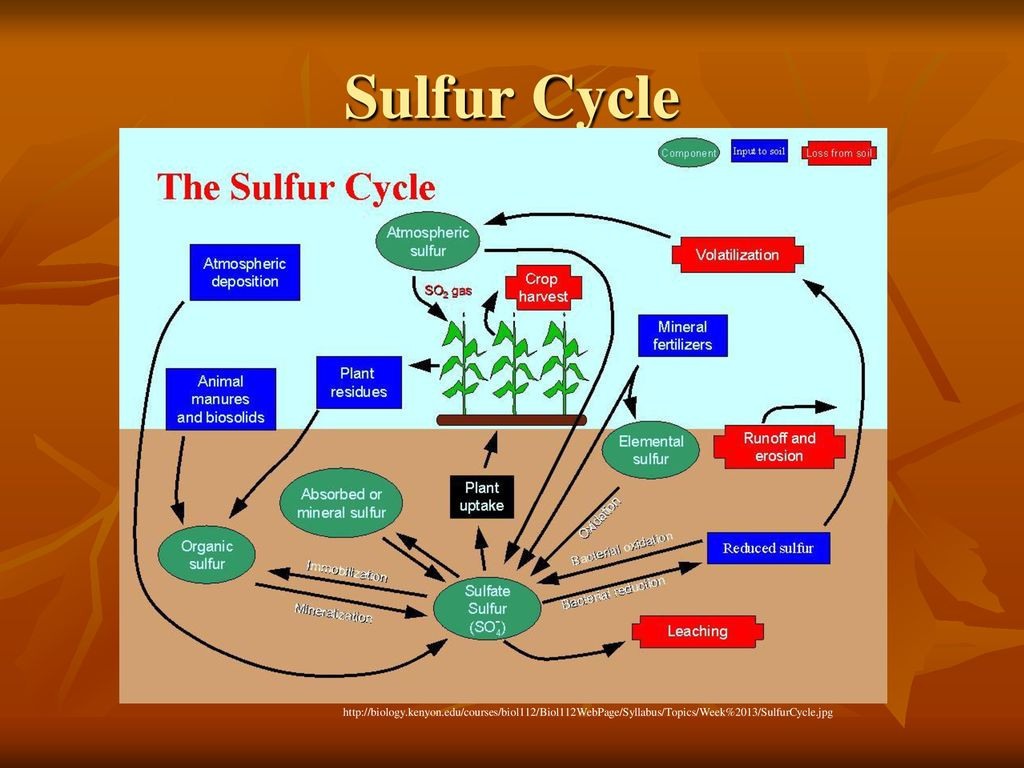 hight resolution of 14 sulfur cycle
