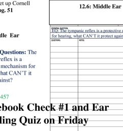 notebook check 1 and ear labeling quiz on friday [ 1024 x 768 Pixel ]