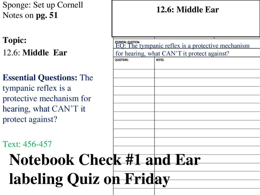 medium resolution of notebook check 1 and ear labeling quiz on friday