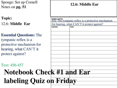 small resolution of notebook check 1 and ear labeling quiz on friday