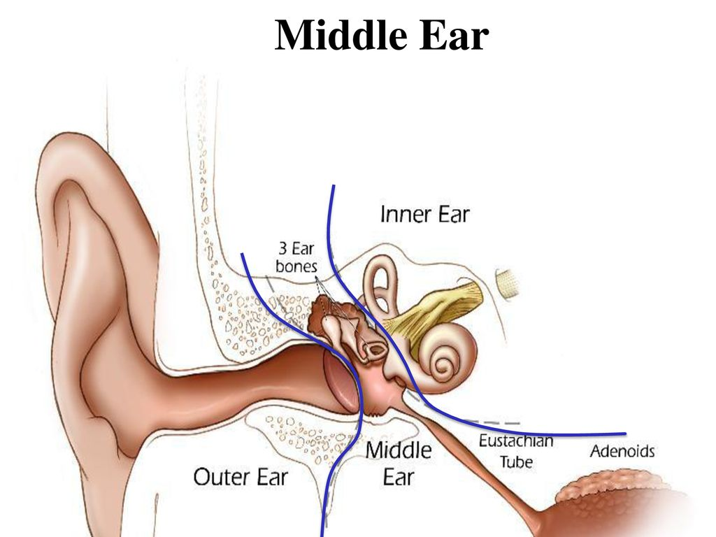 hight resolution of 3 middle ear