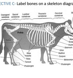26 objective c label bones on a skeleton diagram [ 1024 x 768 Pixel ]