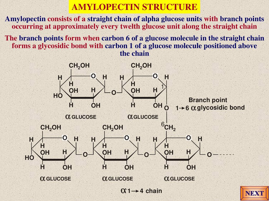hight resolution of amylopectin structure