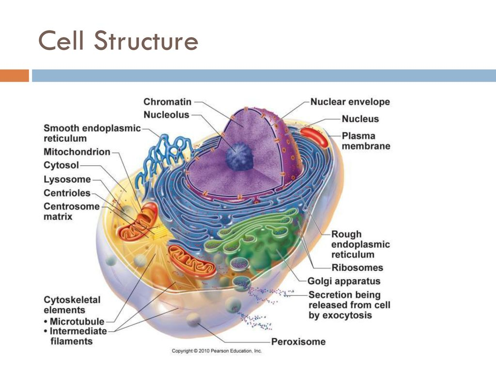 hight resolution of 4 cell structure