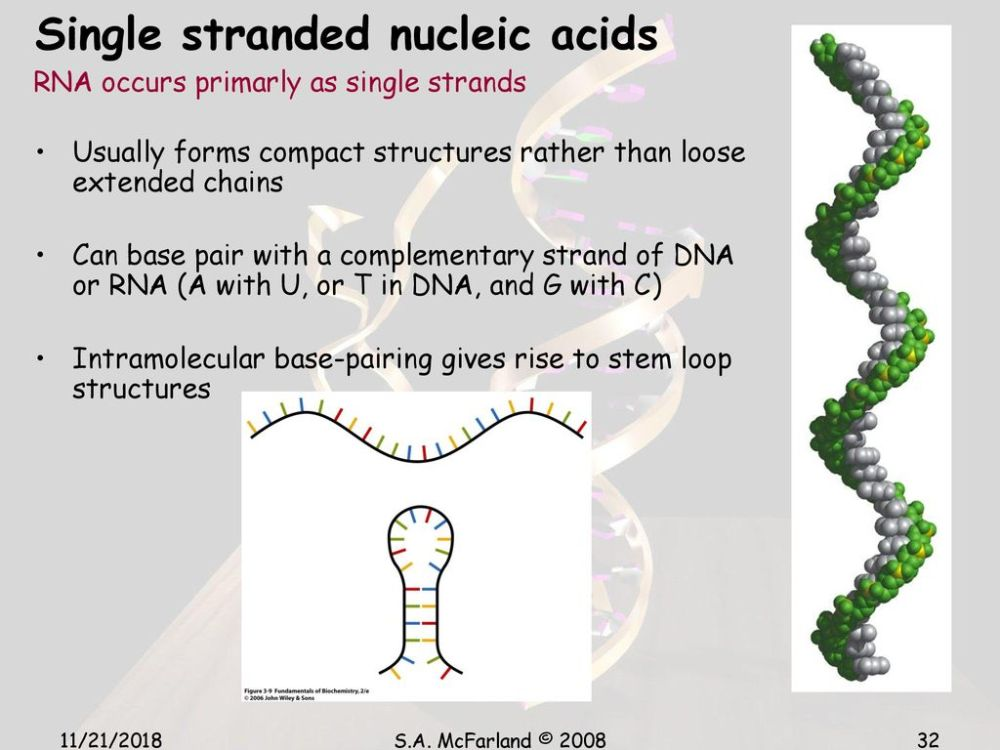 medium resolution of 32 single stranded nucleic acids