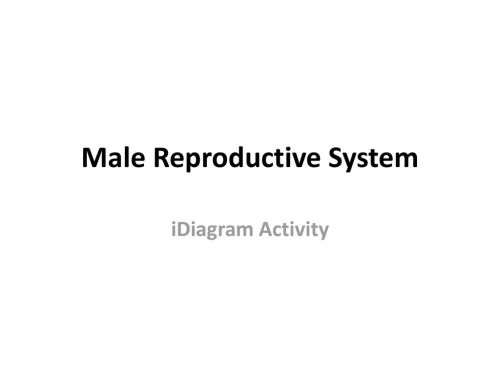 small resolution of 1 male reproductive system idiagram activity