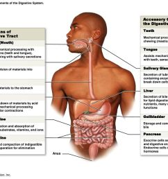figure 24 1 the components of the digestive system  [ 1024 x 768 Pixel ]