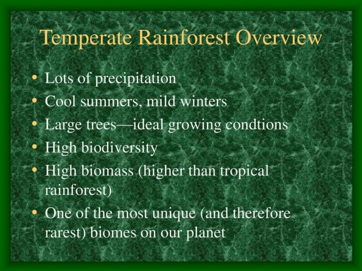 Temperate Rainforest Overview