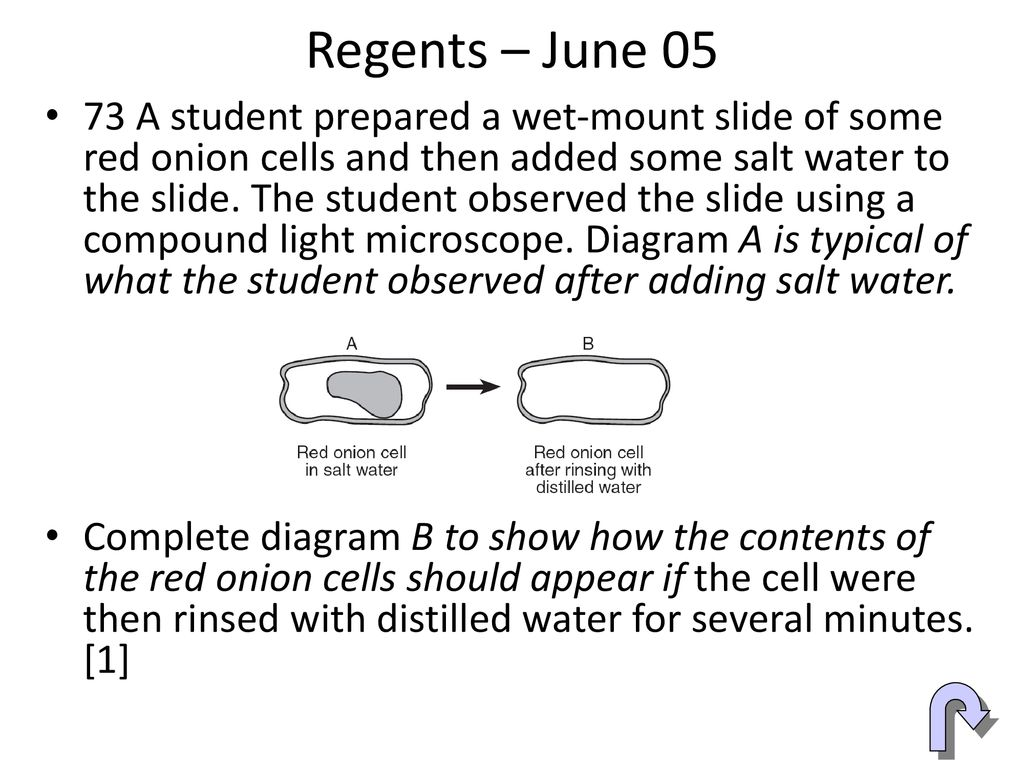 onion cell diagram dol motor control wiring 40x labeled best library teaching a lesson le using regents diagrams ppt download 31