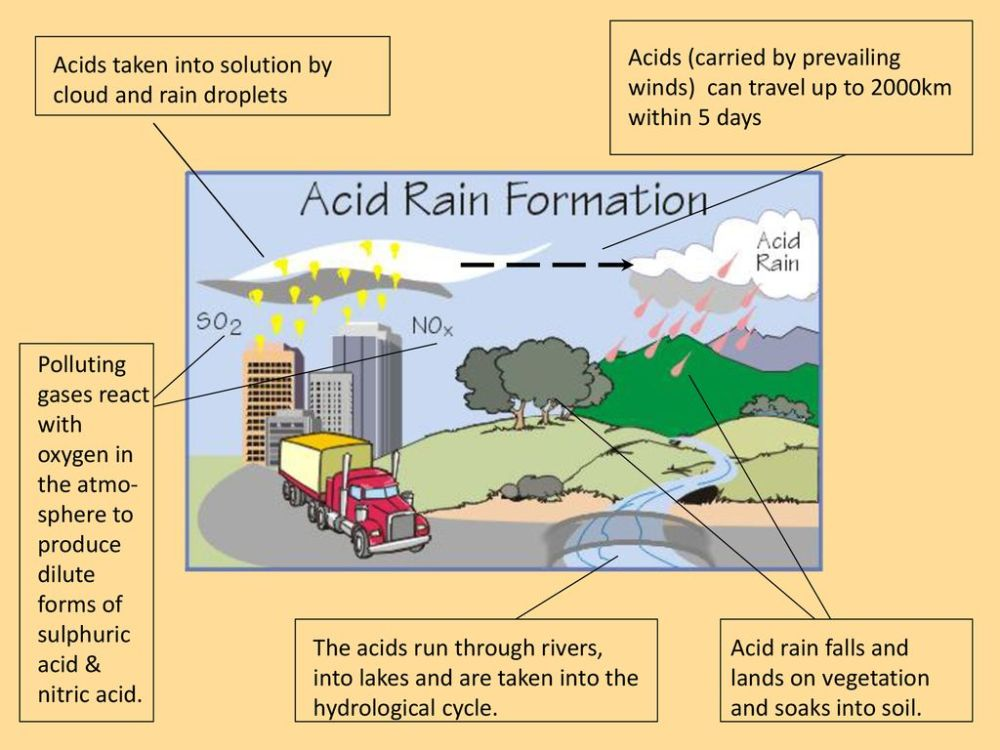 medium resolution of 5 acids carried