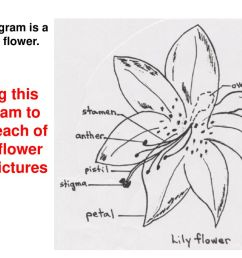 using this diagram to label each of your flower part pictures [ 1024 x 768 Pixel ]