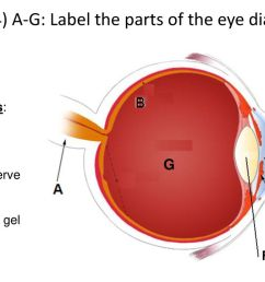 9 of 24 a g label the parts of the eye diagram  [ 1024 x 768 Pixel ]