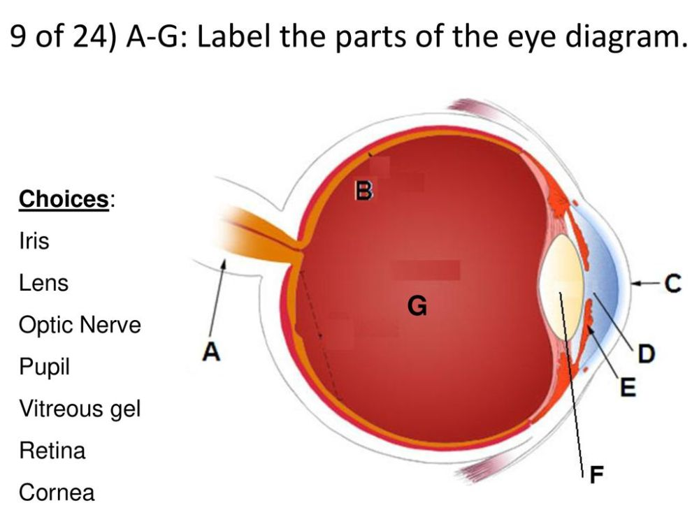 medium resolution of 9 of 24 a g label the parts of the eye diagram