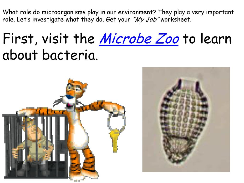 hight resolution of Microbe Web Quest!. - ppt download