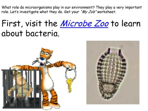 small resolution of Microbe Web Quest!. - ppt download