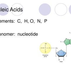4 nucleic acids elements c h o n p monomer nucleotide [ 1024 x 768 Pixel ]