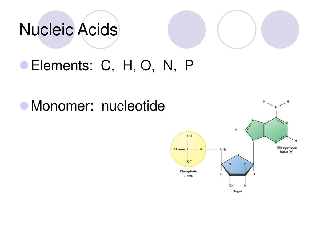 hight resolution of 4 nucleic acids elements c h o n p monomer nucleotide
