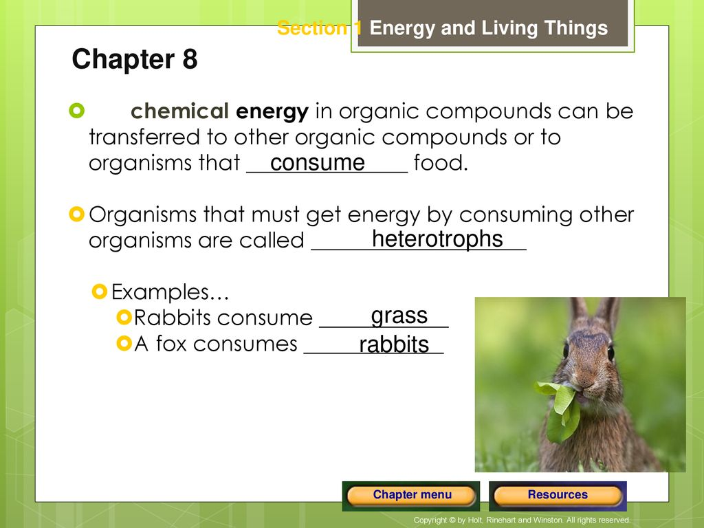 Organisms That Get Energy By Consuming Other Organisms Are