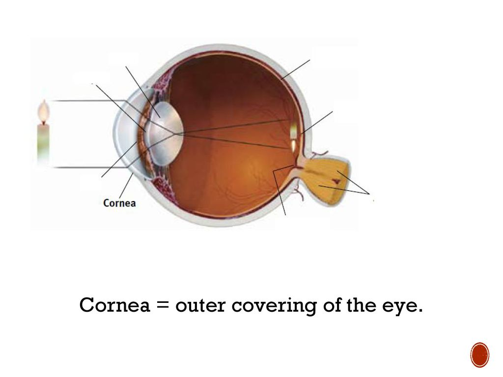 hight resolution of 4 cornea outer covering of the eye