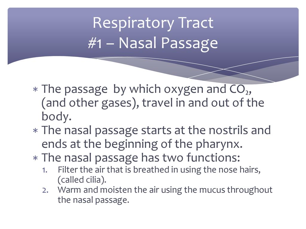 the respiratory system ppt
