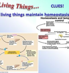 3 all living things clues 6 all living things maintain homeostasis  [ 1024 x 768 Pixel ]