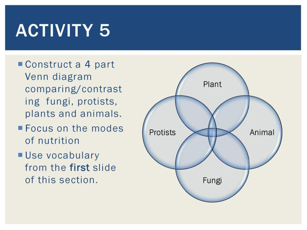 medium resolution of activity 5 construct a 4 part venn diagram comparing contrasting fungi protists plants