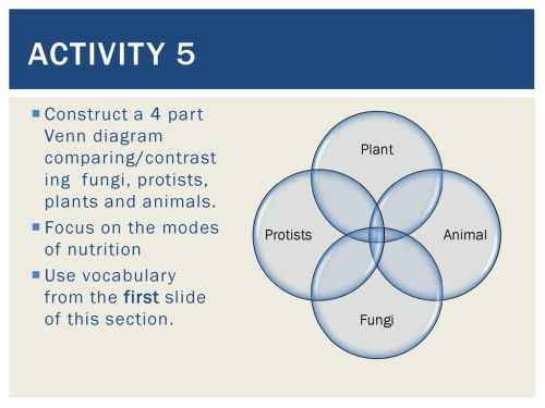 small resolution of activity 5 construct a 4 part venn diagram comparing contrasting fungi protists plants