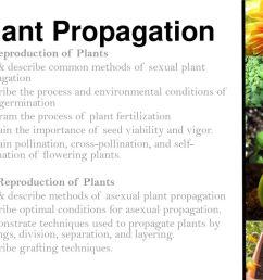 plant propagation sexual reproduction of plants [ 1024 x 768 Pixel ]