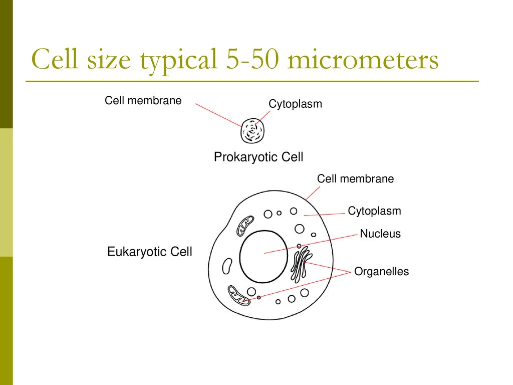 hight resolution of 10 cell size typical