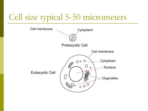 small resolution of 10 cell size typical