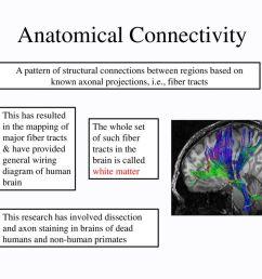 5 anatomical connectivity [ 1024 x 768 Pixel ]