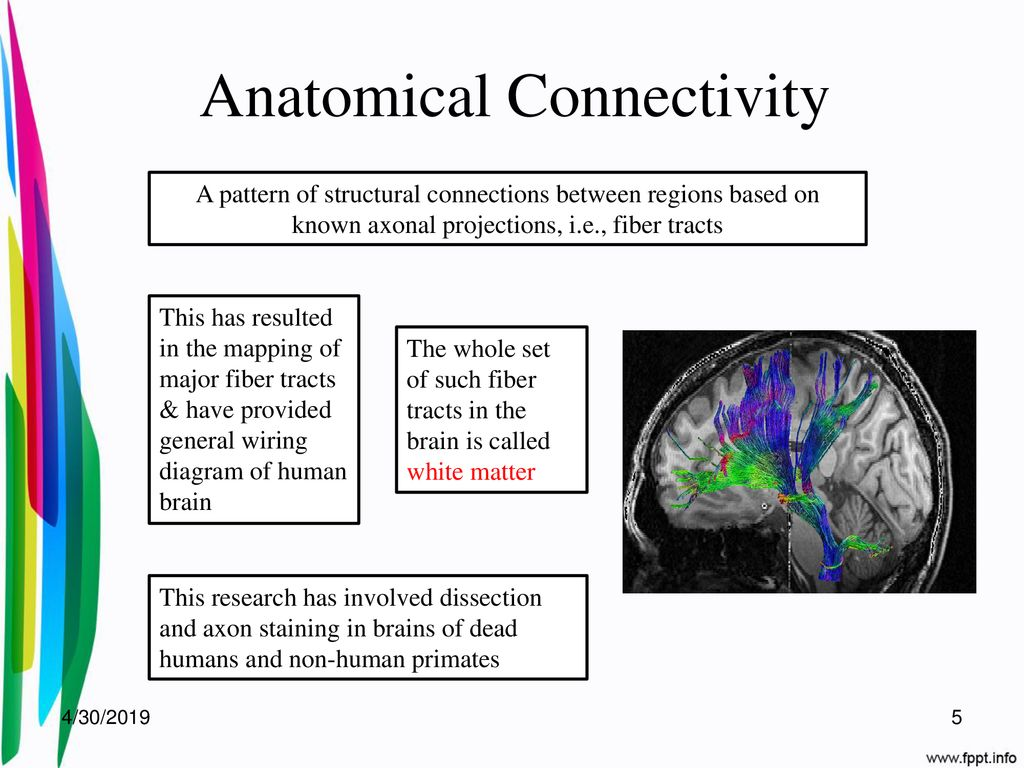 hight resolution of 5 anatomical connectivity